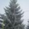 hó, tél, kirándulás 2