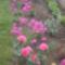 Virágoskertem 001