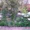 Hortenzia kert részlet 1