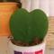 Kaktusz vagyok 1