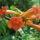 répásy-ék  virágok befőzés kert