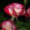 www.tvn.hu_d912e5a710ce4cb80736121ad8ff7639