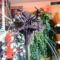 Denevér virág az OBI-ban 4 másolata