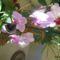 A virágjaim 004kicsi