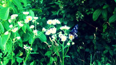 butterflyontheflower2