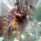 Denevér virág az OBI-ban 3