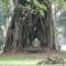 ősi maradványok a fa árnyékában Nepál