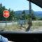 Provence, Mas du Figuier 3