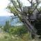 Provence, Mas du Figuier 8
