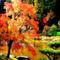 Tópart ősz-1009747