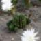 virágok 1