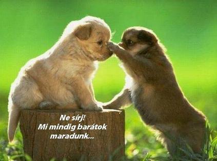 b2 Barátság...