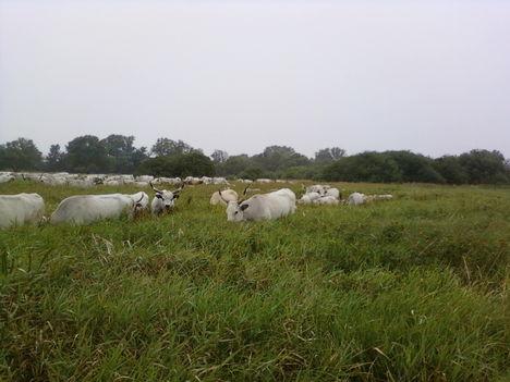 A Tsitári völgy biogazdasága 2012 11