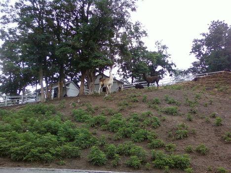 A Tsitári völgy biogazdasága 2012 13