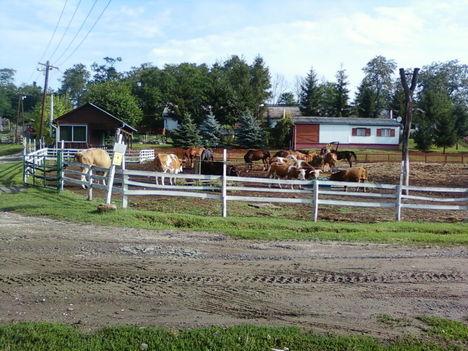 A Tsitári völgy biogazdasága 2012 6