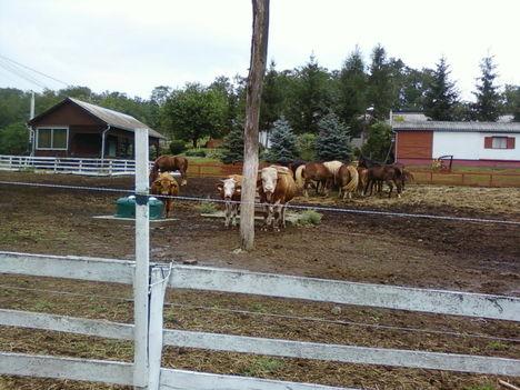 A Tsitári völgy biogazdasága 2012 7