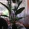 A denevér virág-Elhoztam mert kaptam kedvezményt