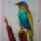 Nádi madár