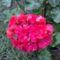 Virágok, disztök 1