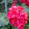 Virágok, disztök 2