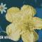 Virágok, disztök 4