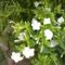 Virágok, disztök 7