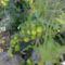 Zöldségeim 4