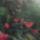 Zemen Ildikó növényei