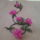 Ancsa gyöngyvirágai