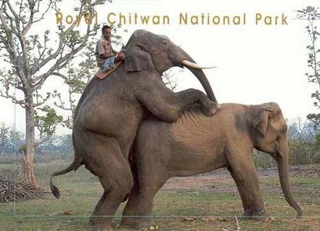 Elefántnász