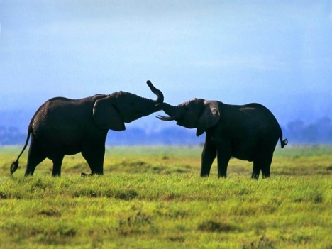 Elefántok 2
