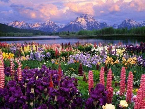 Gyönyörű virágok