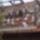 Hodoniczki Zsolt galambjai