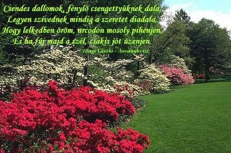 kert szeretet