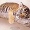 Kis tigris