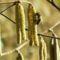 mogyoróbokor méhecskéveljpg