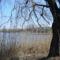 Öreg fák a tó partján