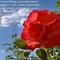 rozsa szeretet