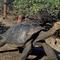 Teknősbéka 3