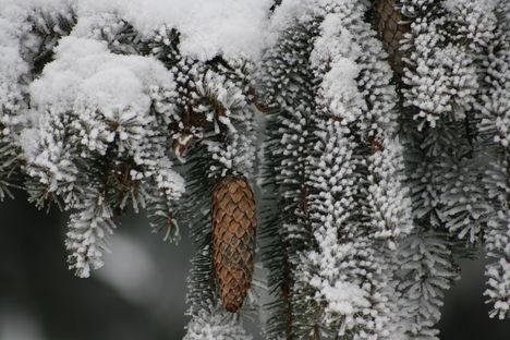 Tobozok a hó alatt