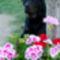 Dani a virágok közt
