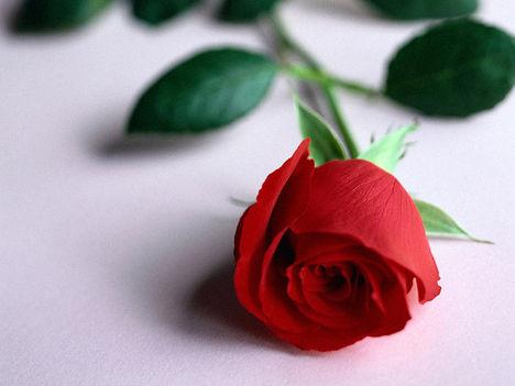 Rózsa...