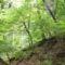Alsó-cuha erdő rész