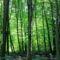Felső-cuaCuha-völgyi erdő rész
