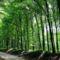 Felső-Cuha-völgyi erdő rész