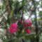 Oleander02