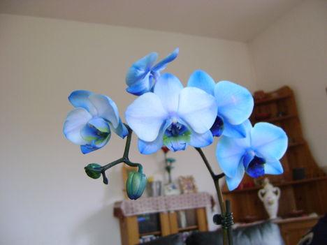 kék szépség 1