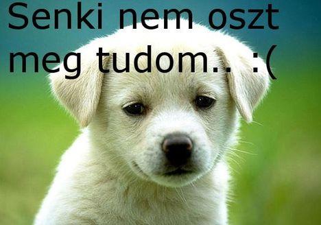 Kutya ...