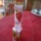 tál, üveg 6