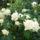 Virágok a kiskertemből( ÁGI)